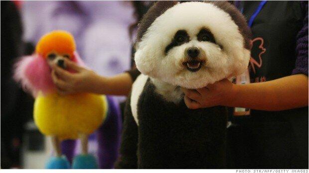 1,5 tỉ đô la cho việc chăm sóc thú cưng