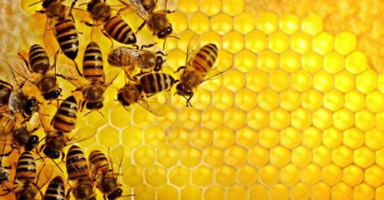 sữa ong chúa là gì ? sữa ong chúa có tác dụng gì ?