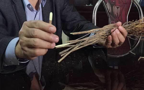 cách chọn hoa đỗ quyên khô nở đẹp cho dịp tết