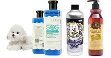 3 loại sữa tắm cho chó lông trắng có bộ lông đẹp hoàn hảo