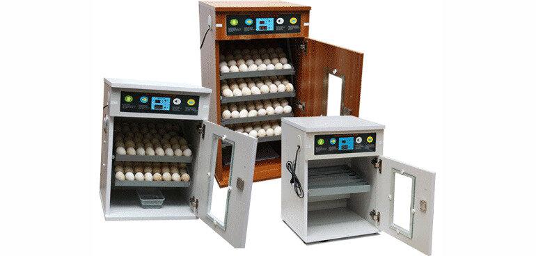 máy ấp trứng gia cầm