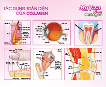 5 tác dụng chính của collagen có thể bạn chưa biết