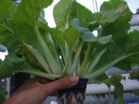 6 kinh nghiệm dành cho người mới trồng rau tại nhà