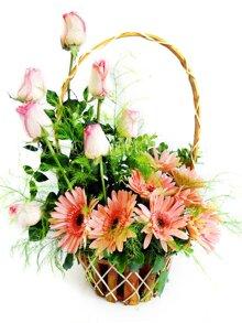 6 loài hoa ý nghĩa nhất dành tặng thầy cô nhân ngày 20/11