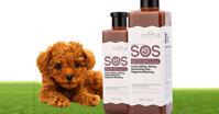 6 loại sữa tắm cho chó Poodle bán chạy nhất hiện nay