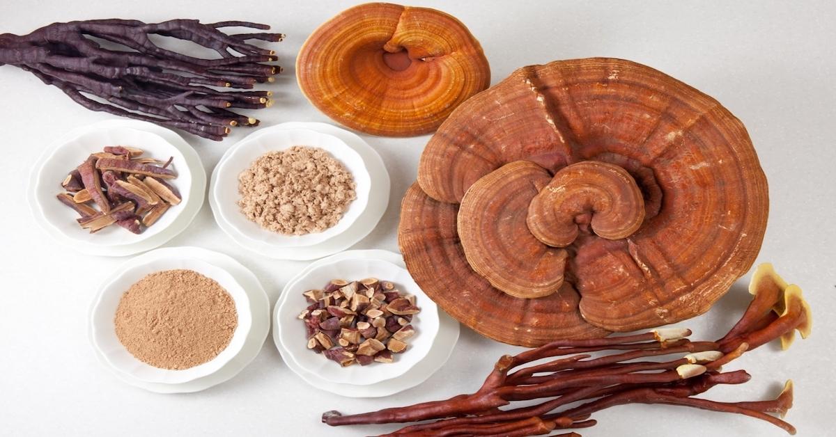 7 Cách pha trà linh chi sao cho tốt và hiệu quả