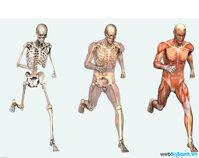 7 sự thật thú vị về cơ thể con người