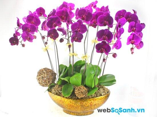 8 loại hoa nên cắm trong ngày Tết để rước lộc vào nhà