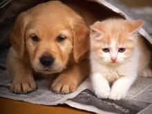 Nuôi mèo hay nuôi chó tốn hơn?