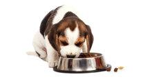 Các loại thức ăn cho chó con 2 tháng tuổi tốt nhất