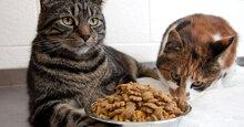 Các tiêu chí đánh giá thức ăn khô cho mèo tốt nhất