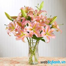 Cách cắm hoa ly đẹp trong ngày Tết