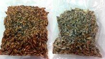 Cách chọn hạt bàng rang muối, rang đường ăn Tết