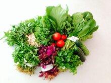 Cách chọn rau củ sạch, không ngậm thuốc