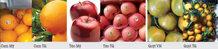 Cách nhận biết hoa quả Việt Nam và Trung Quốc