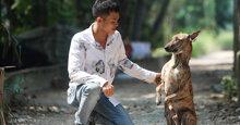 Cẩm nang về thức ăn cho chó Phú Quốc cho người mới nuôi