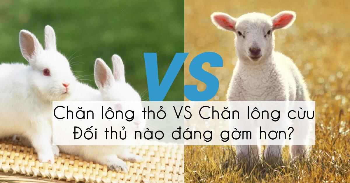 Chăn lông cừu và chăn lông thỏ chăn nào tốt hơn ?