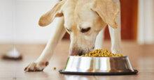 Chọn mua thức ăn khô cho chó giá rẻ cần lưu ý điều gì?