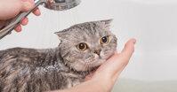 Chọn sữa tắm cho chó mèo không khó nếu biết cách này