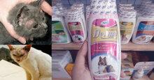 Chọn sữa tắm cho mèo trị nấm da tốt nhất