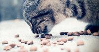 Chọn thức ăn khô cho mèo cần biết điều này