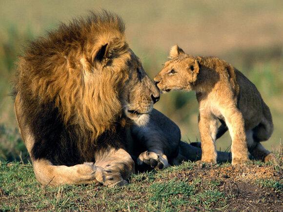 Chụp động vật hoang dã cực đẹp chỉ với một chiếc máy ảnh cơ bản