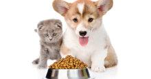 Có nên cho mèo ăn thức ăn của chó không?