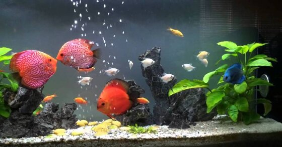 Có nên dùng đèn sưởi bể cá trong mùa đông?