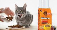 Có nên mua thức ăn cho mèo Minino không?