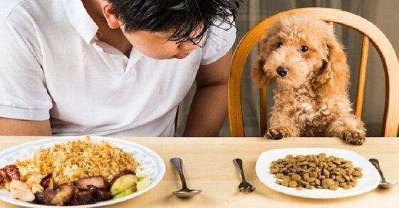 Có nên sử dụng thức ăn khô cho chó?