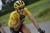 6 sai lầm cần tuyệt đối tránh với người bắt đầu đi xe đạp