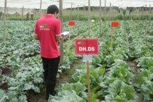 Đại lý cửa hàng rau sạch Liên Thảo tại Hà Nội