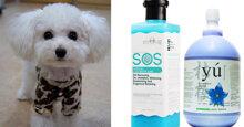 Đâu là sữa tắm cho chó Poodle trắng tốt nhất?