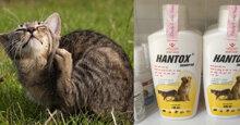 Đâu là sữa tắm trị ve rận cho mèo hiệu quả nhất?