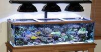 Đèn sưởi cho cá có những loại nào?