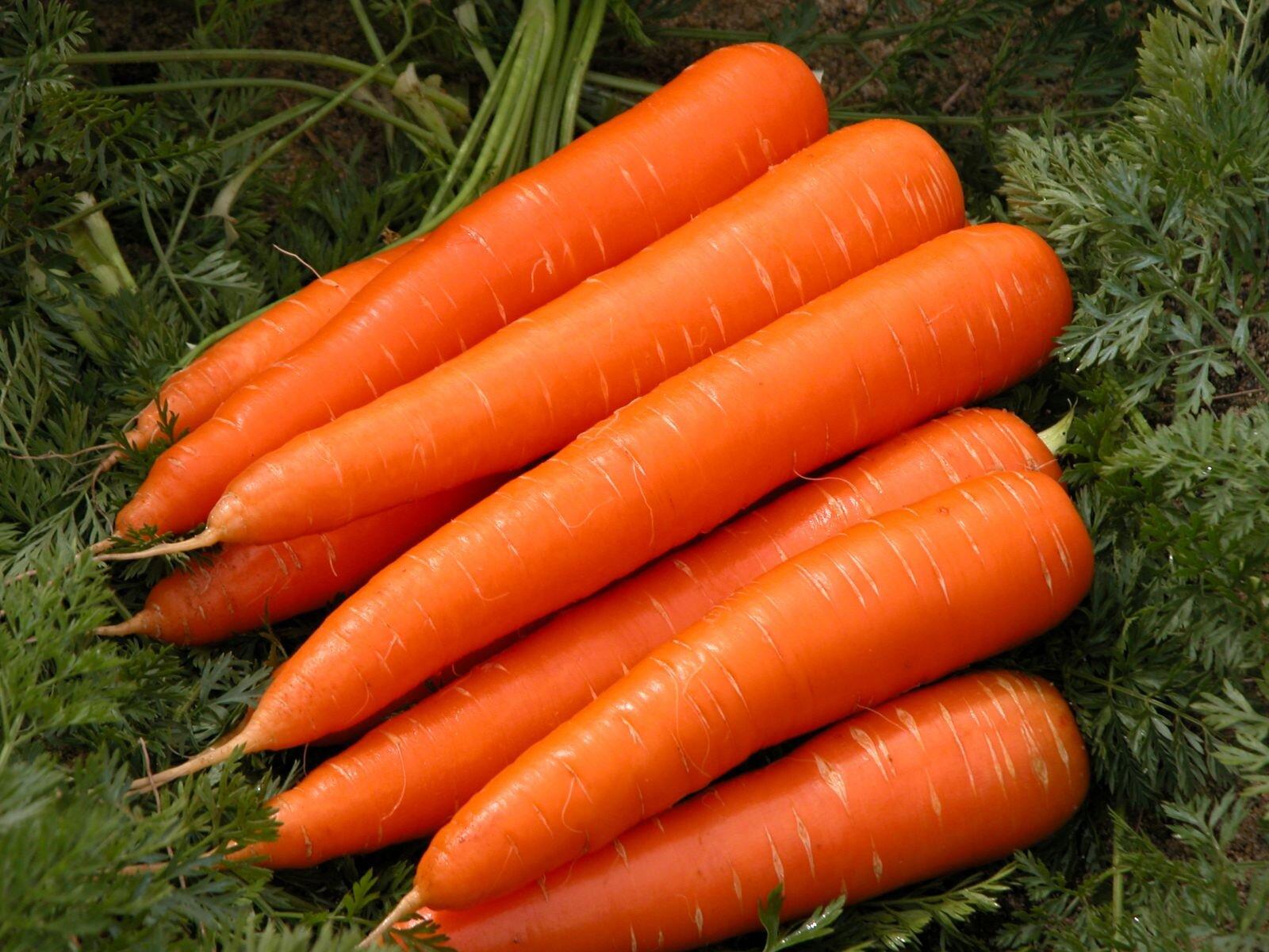 Cà rốt - thực phẩm lợi sữa bạn nên bổ sung hằng ngày