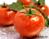 Những thực phẩm tự nhiên trị nám da hiệu quả