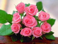 Giá hoa hồng