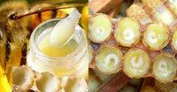 Giá ong chúa 6 triệu đồng 1 con: tại sao sữa ong chúa lại rẻ vậy?