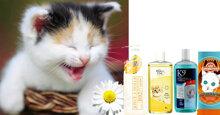 Giới thiệu loại sữa tắm cho mèo con tốt nhất hiện nay
