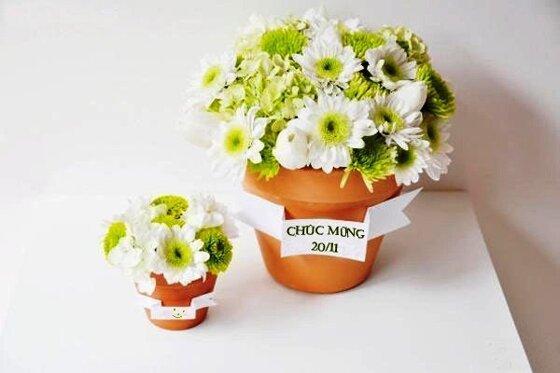 Học cách trồng chậu hoa cúc nhỏ xinh tặng thầy cô ngày 20/11