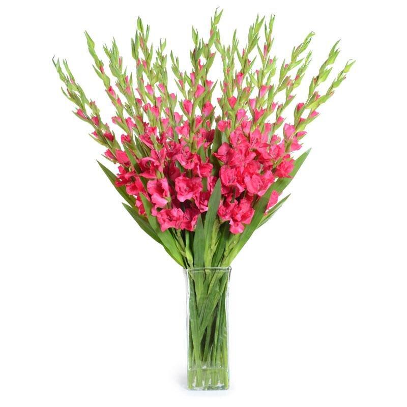 Hướng dẫn cách cắm hoa lay ơn từ A đến Z cho Tết thêm sung túc