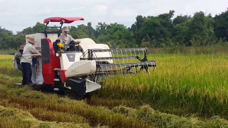 máy gặt Yanmar AW70V