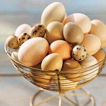 Cách bảo quản và chế biến trứng ngon, đúng cách