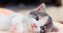 Khám phá 5 loại sữa tắm cho mèo con tốt nhất và an toàn nhất
