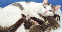Kinh nghiệm vô giá khi chọn thức ăn cho mèo mẹ mới đẻ