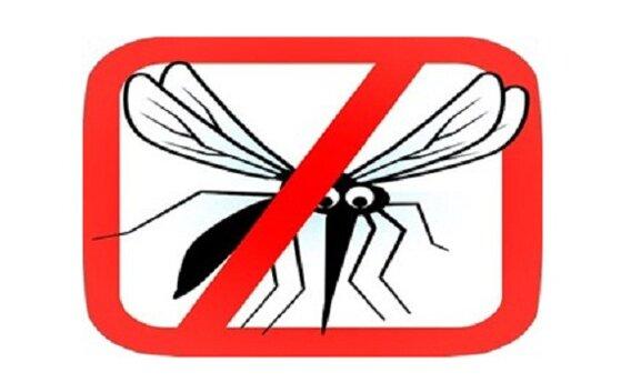 Loại bỏ muỗi với 4 loại cây cảnh dễ trồng
