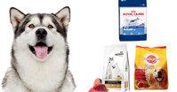 Loại thức ăn khô tốt nhất dành cho chó Alaska