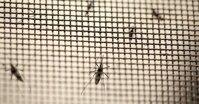 Lý do bạn không nên tự làm cửa lưới chống muỗi