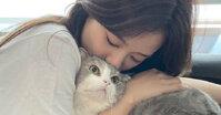 Lý do bạn nên mua sữa tắm cho mèo SOS ngay lập tức